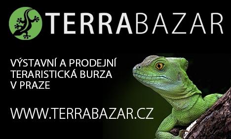 [TERRABAZAR_468x282_2.jpg]